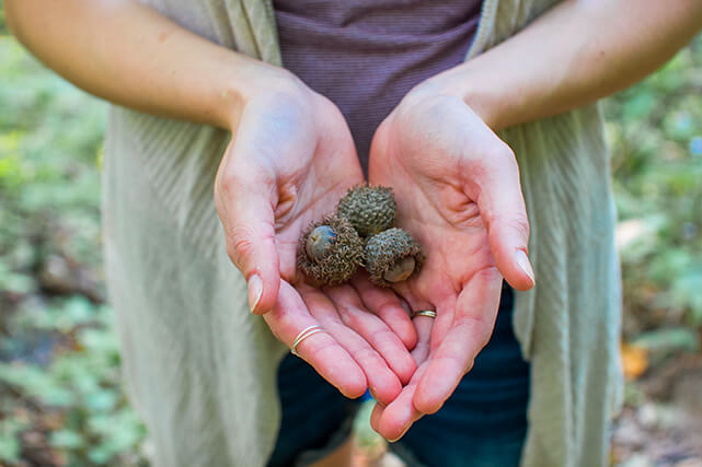 Persona sostiene en las manos bellotas para la buena suerte