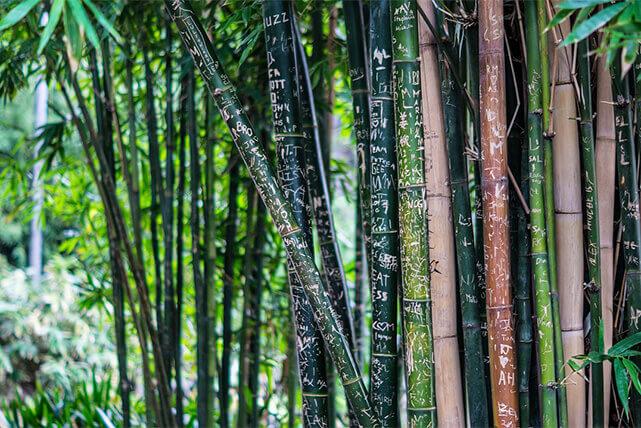Bambú como amuleto de la buena suerte